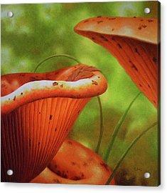 Shortcut To Mushrooms Acrylic Print