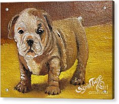 Flying Lamb Productions      Shortstop The English Bulldog Pup Acrylic Print