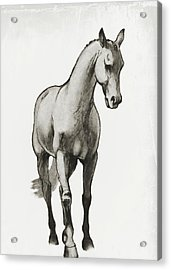Shoulder-in Sketch Acrylic Print by JAMART Photography