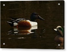Acrylic Print featuring the photograph Shovel Tail And A Wigeon by Jeff Swan