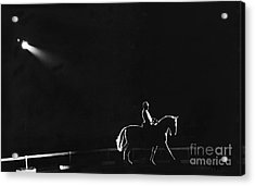 Show Horse Acrylic Print by Jim Wright