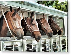 Acrylic Print featuring the photograph Show Horses On The Move  by Wilma Birdwell