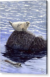 Show Off Acrylic Print by Catherine G McElroy