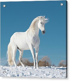 Show Off Acrylic Print