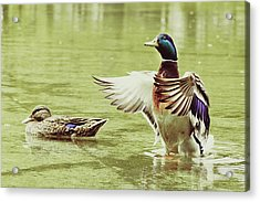 Show Your Colors Acrylic Print by Andrew Kubica