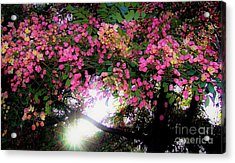 Acrylic Print featuring the photograph Shower Tree Flowers And Hawaii Sunset by D Davila