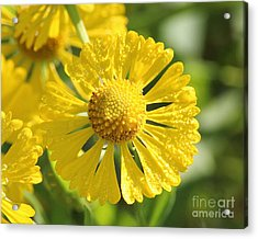 Showered With Love Acrylic Print by Anita Oakley