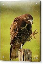 Acrylic Print featuring the photograph Showing Claws by Charles McKelroy