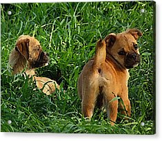 Showing Her Mutt. Acrylic Print