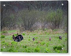 Acrylic Print featuring the photograph Showing Off by Bill Wakeley