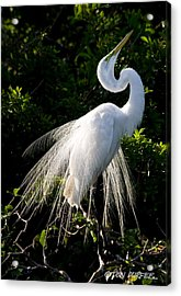 Showing Off Acrylic Print by Don Durfee