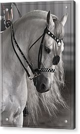 Showtime Acrylic Print by Wes and Dotty Weber