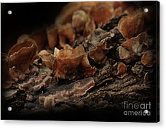 Acrylic Print featuring the photograph Shrooms by Kim Henderson