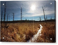 Acrylic Print featuring the photograph Shrub Swamp by Sue Collura