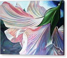 Shy Bloom Acrylic Print