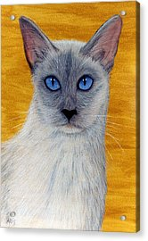 Acrylic Print featuring the pastel Siam by Jan Amiss