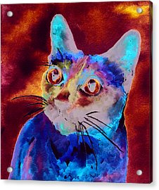 Siamese Cat Acrylic Print by Christy  Freeman