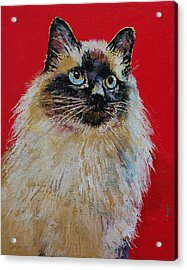 Siamese Cat Portrait Acrylic Print by Michael Creese