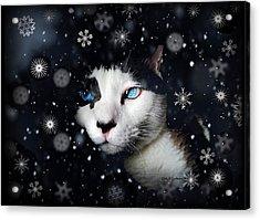 Siamese Cat Snowflakes Image   Acrylic Print