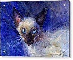 Siamese Cat  Acrylic Print by Svetlana Novikova