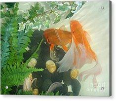Siamese Fighting Fish 2 Acrylic Print