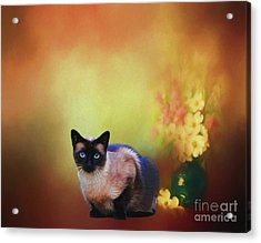 Siamese If You Please Acrylic Print by Suzanne Handel
