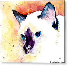 Acrylic Print featuring the painting Siamese by Jo Lynch