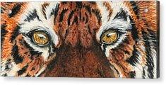 Sib Tig Eye Acrylic Print by Laurie Bath