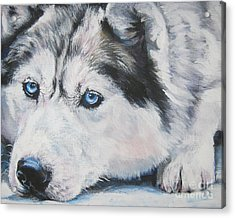Siberian Husky Up Close Acrylic Print