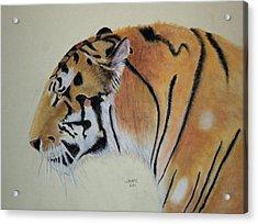 Siberian Tiger Acrylic Print by Joanne Giesbrecht