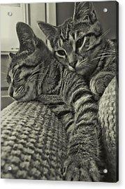 Siblings Acrylic Print by JAMART Photography