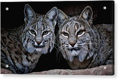 Acrylic Print featuring the photograph Side By Side by Elaine Malott