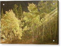 Acrylic Print featuring the photograph Side-lit Aspens - Autumn In Eastern Sierra California by Ram Vasudev