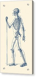 Side View Skeletal Diagram - Vintage Anatomy Poster Acrylic Print