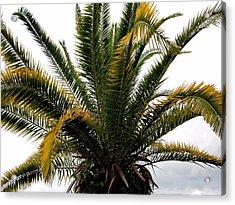 Sideshow Palm Acrylic Print
