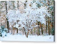 Siebold Viburnum In Snow Acrylic Print