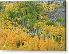 Sierra Autumn Colors Acrylic Print by Ram Vasudev