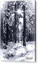 Sierra Forest Show Acrylic Print by William Havle