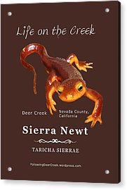 Sierra Newt - Color Newt - White Text Acrylic Print