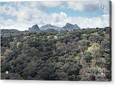 Sierra Ronda, Andalucia Spain Acrylic Print