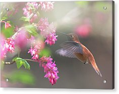 Sign Of Spring 2 Acrylic Print by Randy Hall