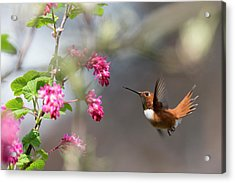 Sign Of Spring 3 Acrylic Print by Randy Hall