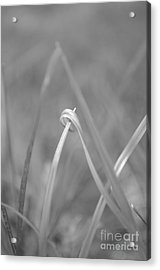 Signed By Nature 10 Acrylic Print