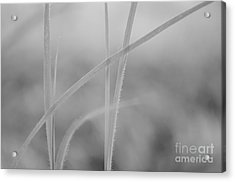 Signed By Nature 8 Acrylic Print
