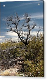 Acrylic Print featuring the photograph Signs Of Life After The Fire by Joe Kozlowski