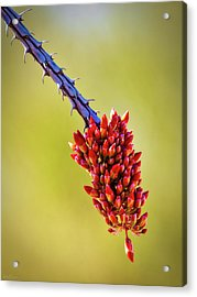 Acrylic Print featuring the photograph Signs Of Life by Rick Furmanek