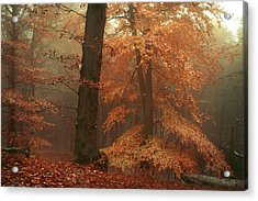 Silence In Misty Woods Acrylic Print by Jenny Rainbow