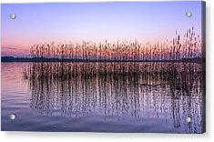 Silent Noise Acrylic Print by Dmytro Korol