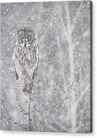 Acrylic Print featuring the photograph Silent Snowfall Portrait by Everet Regal