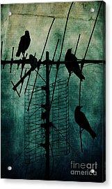 Silent Threats Acrylic Print by Andrew Paranavitana